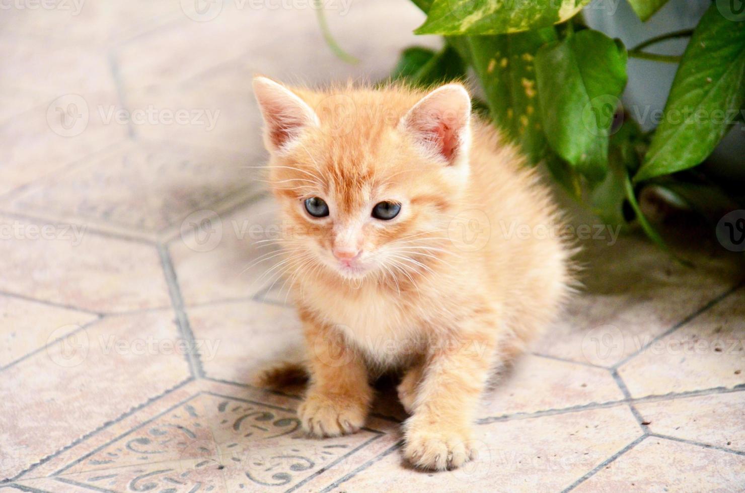 kitten is op zoek naar iets foto