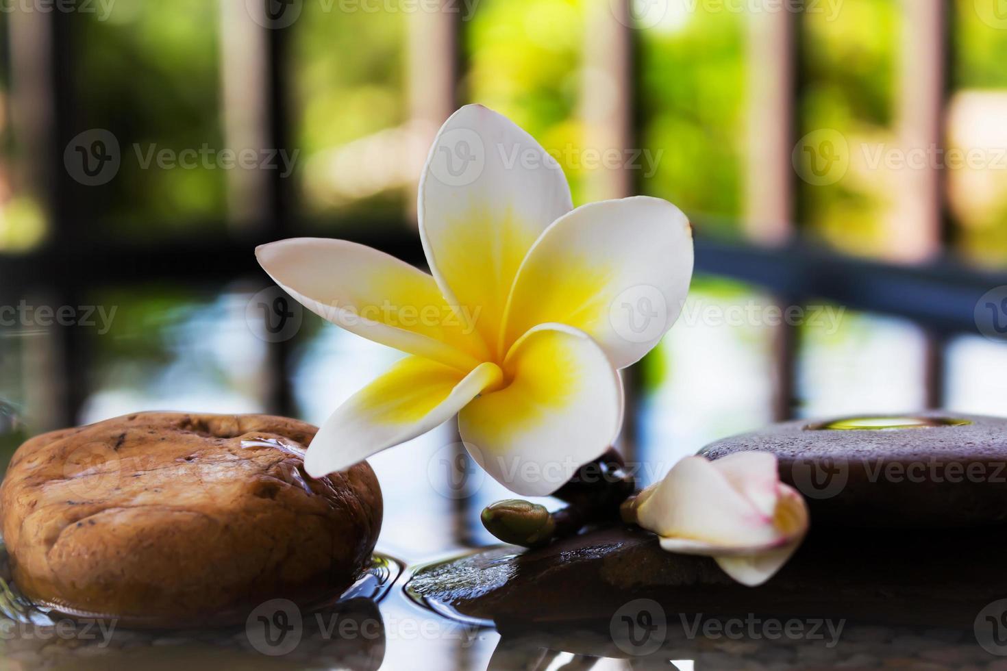 Plumeria o frangipani decorado en agua y roca de cantos rodados foto