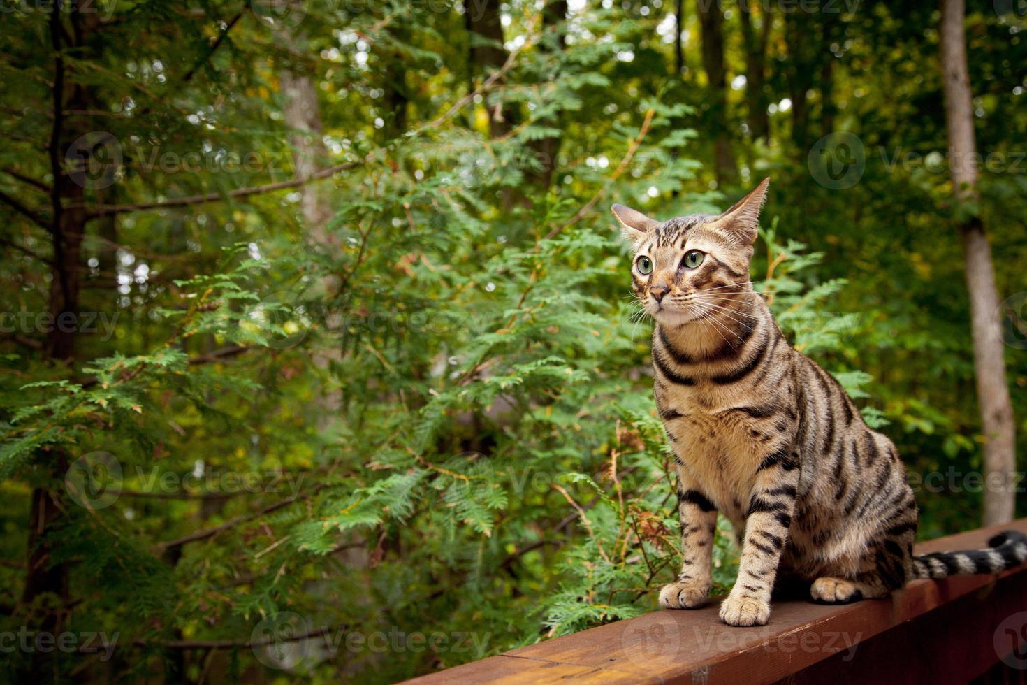 Cat sitting photo