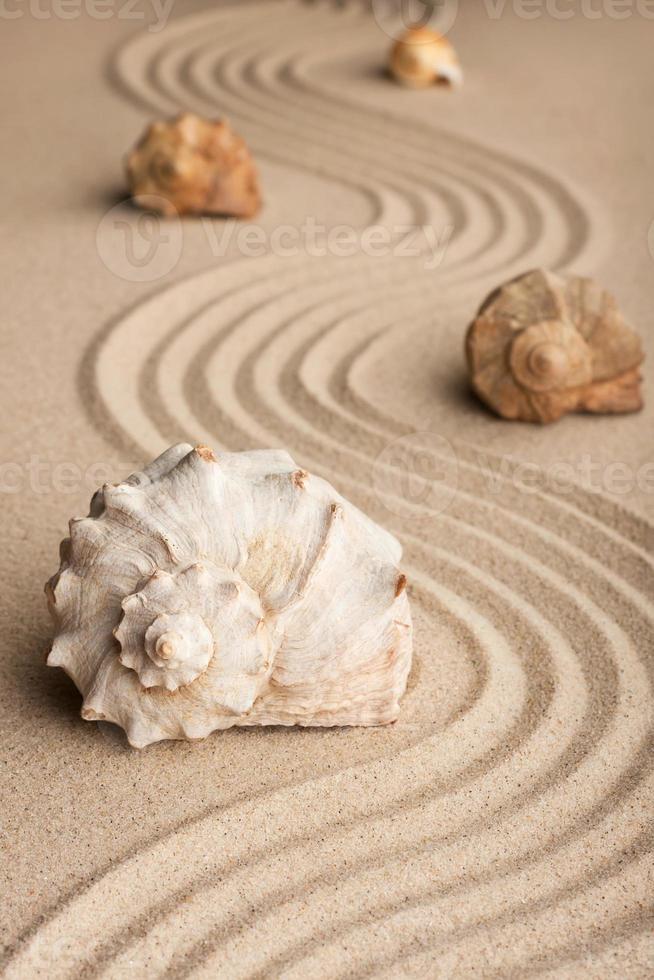 conchas marinas en la arena foto