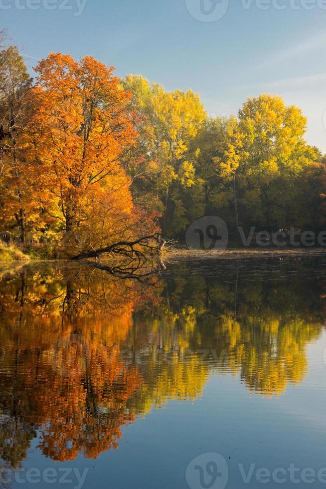 kleuren van de herfst foto