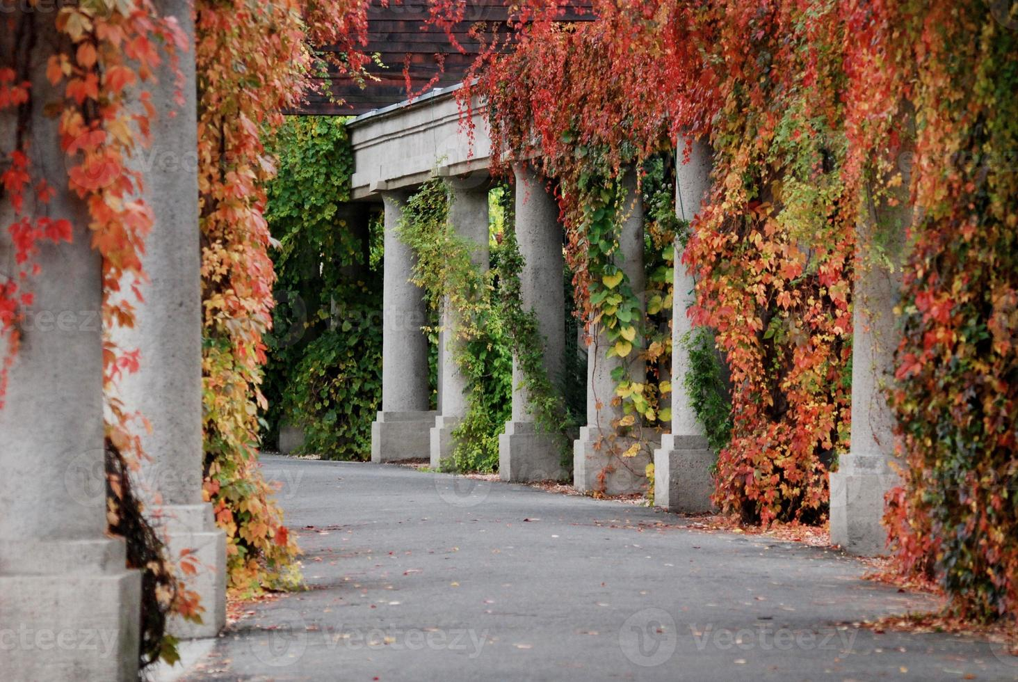 otoño en el parque foto