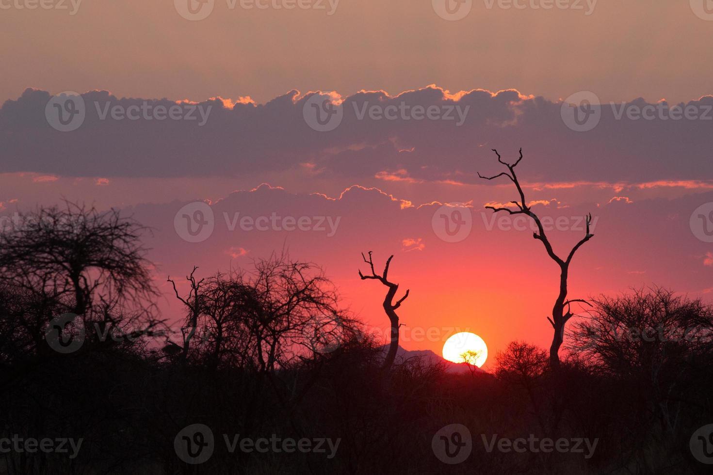 Pink sunset at Medikwe, South Africa photo