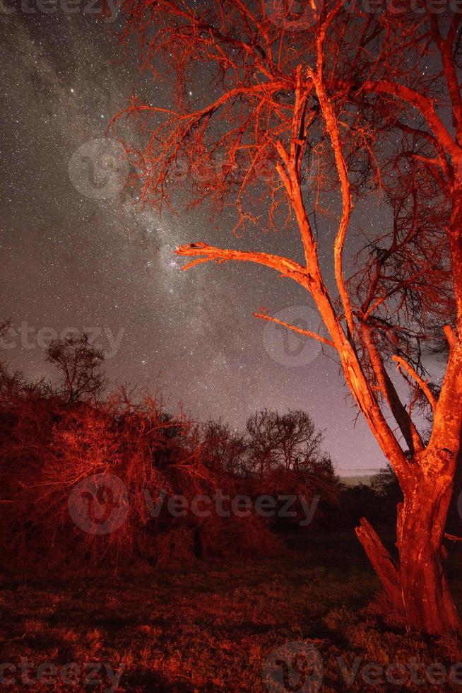 paysage étoilé sud-africain, réserve naturelle de baviaanskloof photo