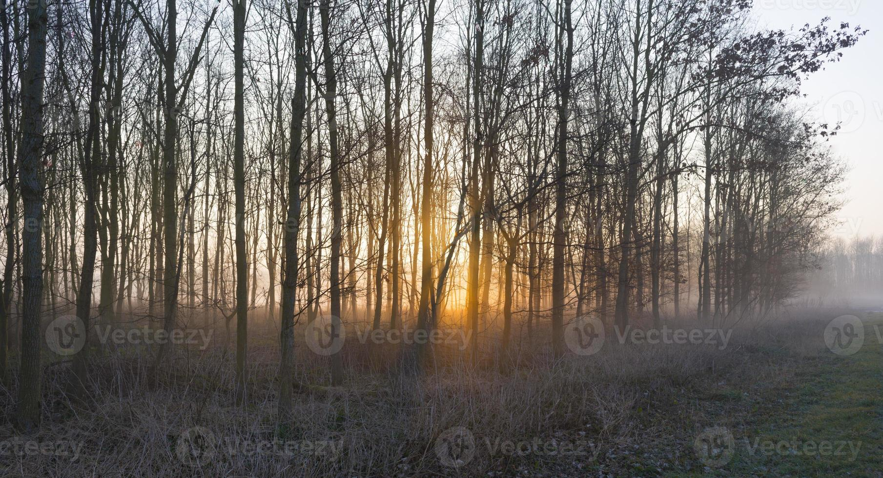 Sunrise in a foggy forest in winter photo
