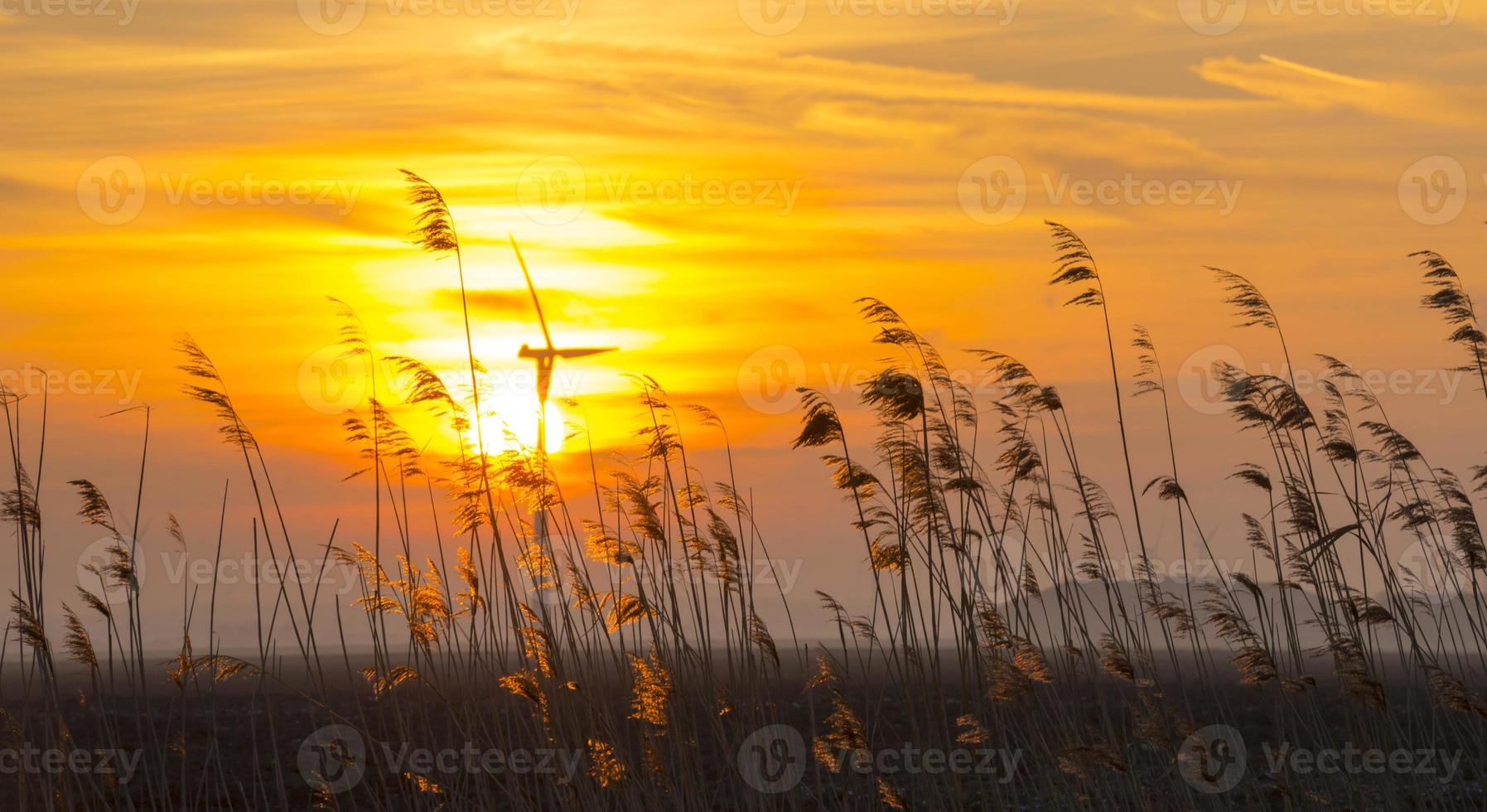 Sunrise over reed in a field in winter photo