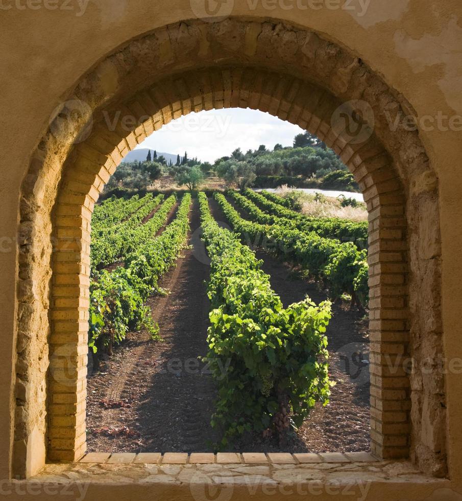 gebogen raam op de wijngaard foto