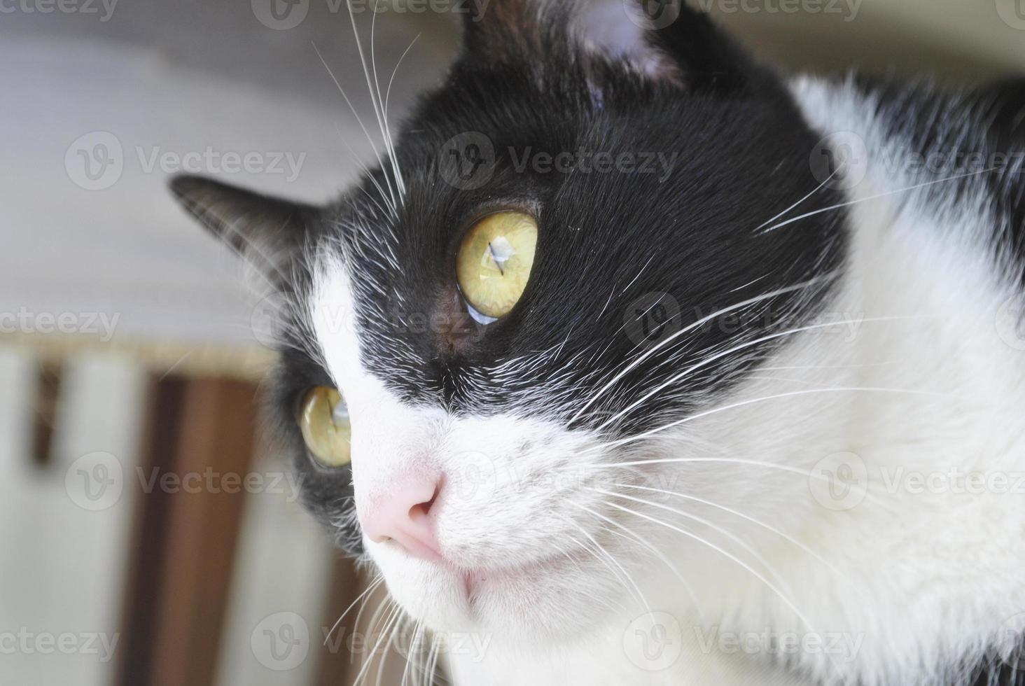 cara de gato foto