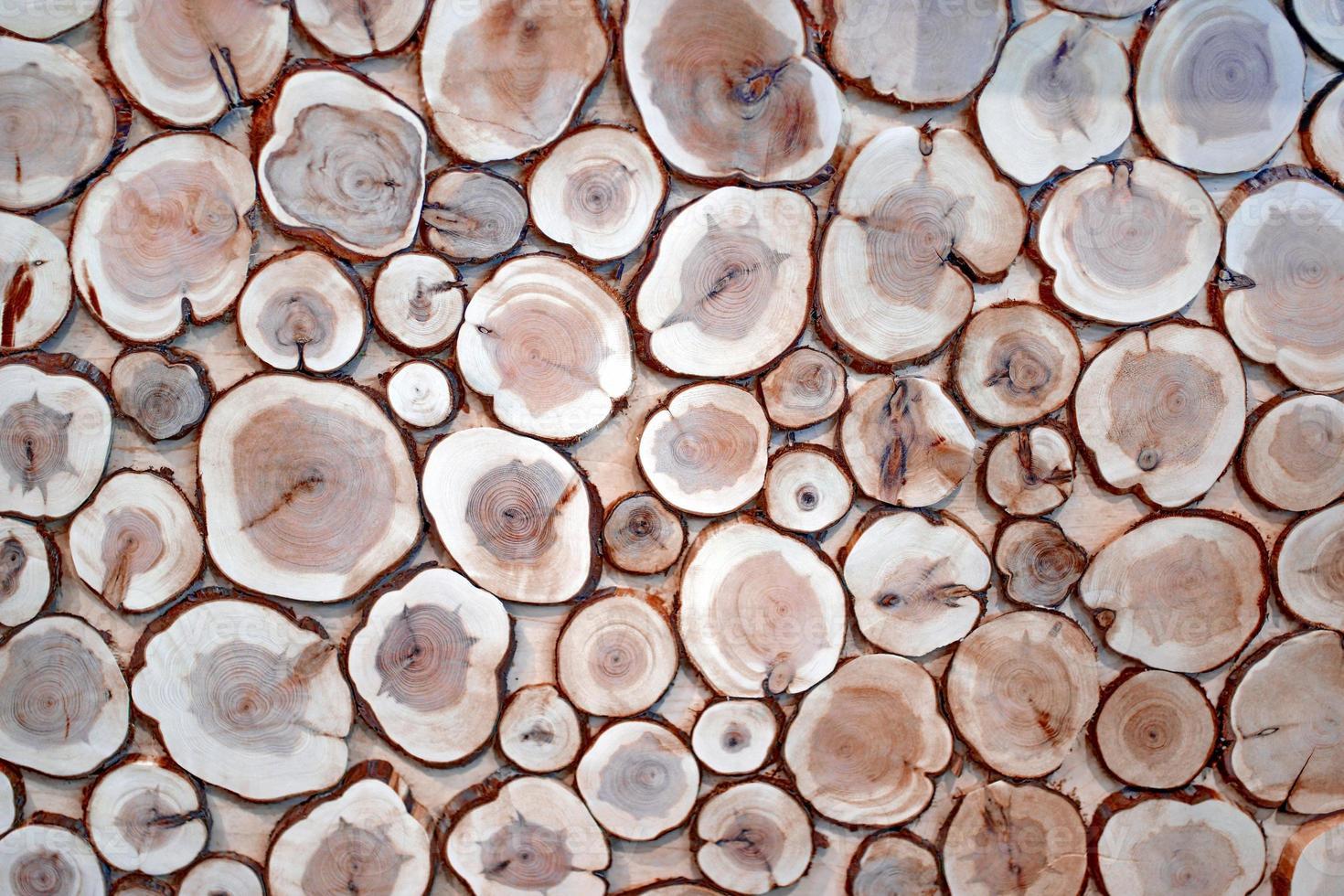 Boxwood tree rings background XXXL 1 photo