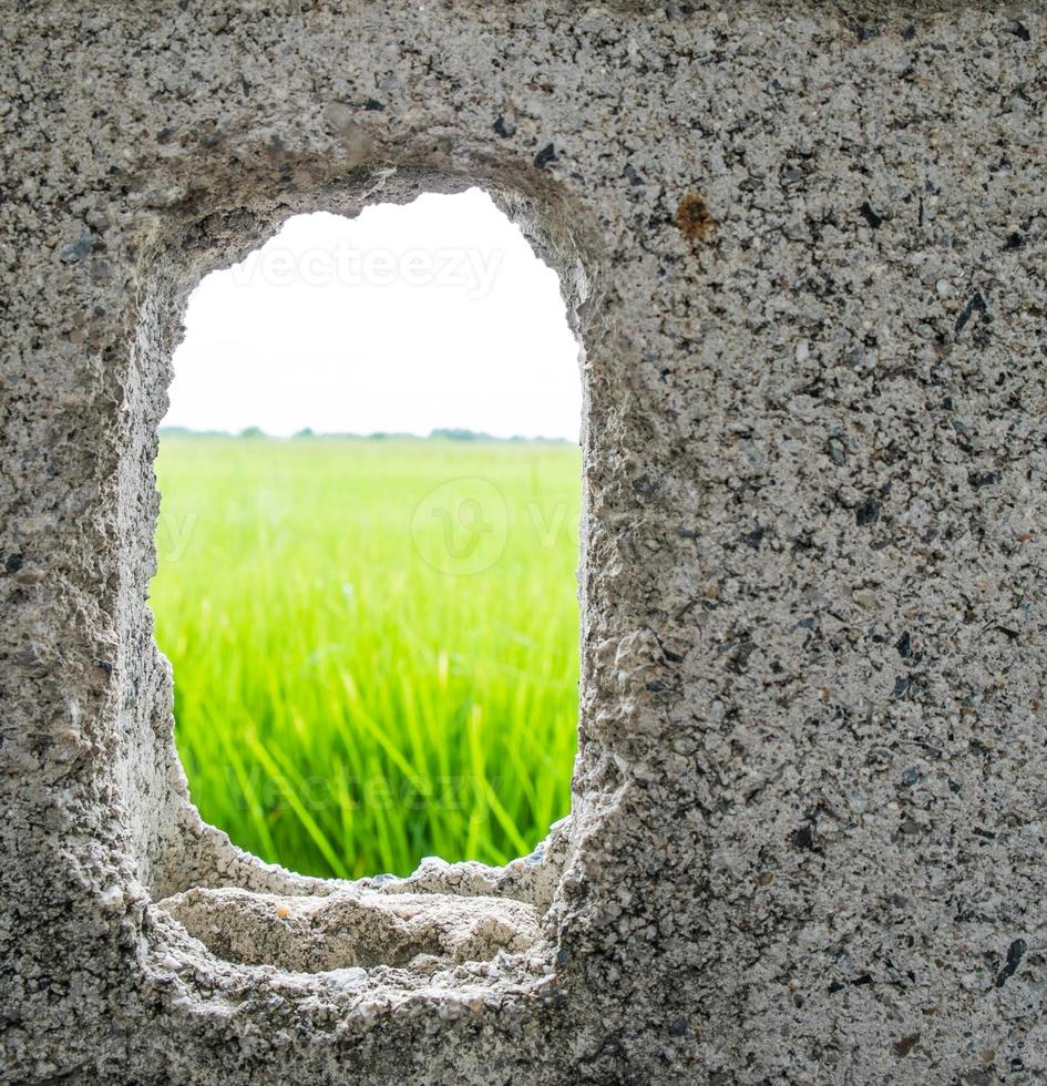 Cracked hole on cement wall see the green rice field photo