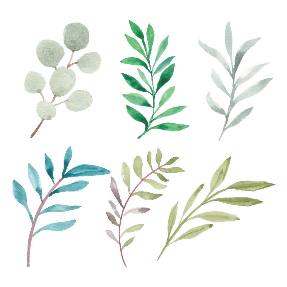 Collection d'éléments de verdure de feuilles peintes à la main vecteur