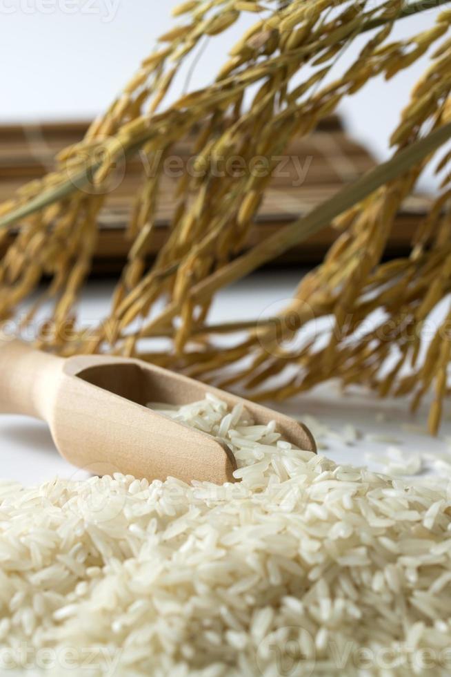Rice grain photo