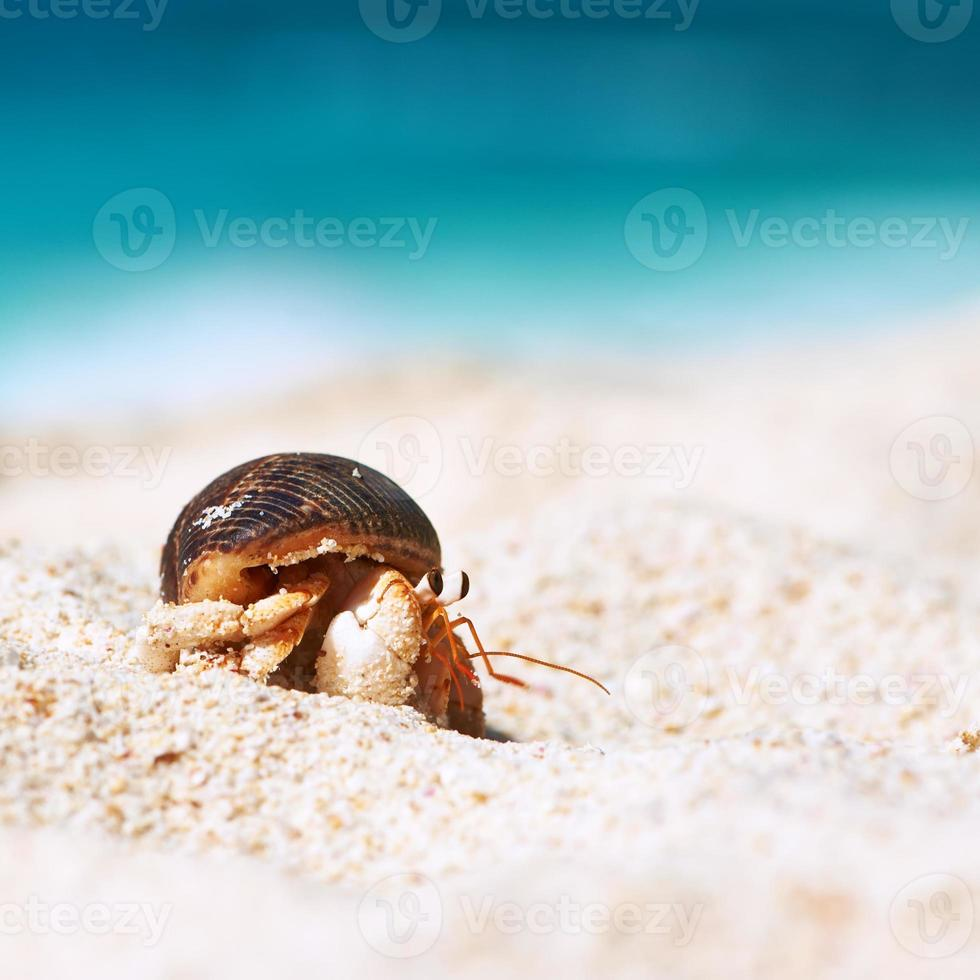 Hermit crab at beach photo