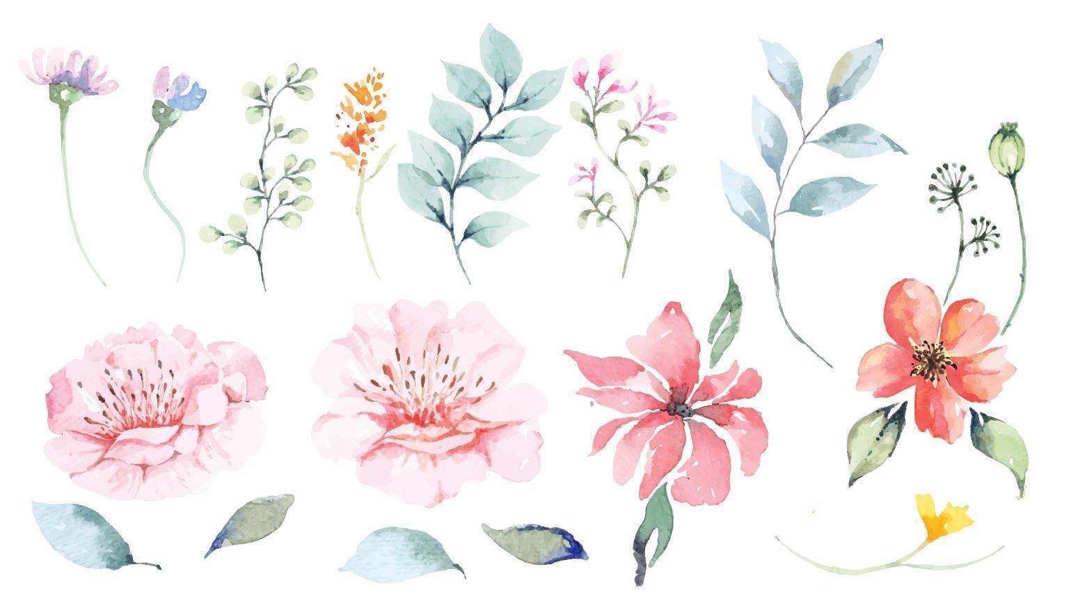 ensemble de pétales de fleurs et conception aquarelle fleur vecteur