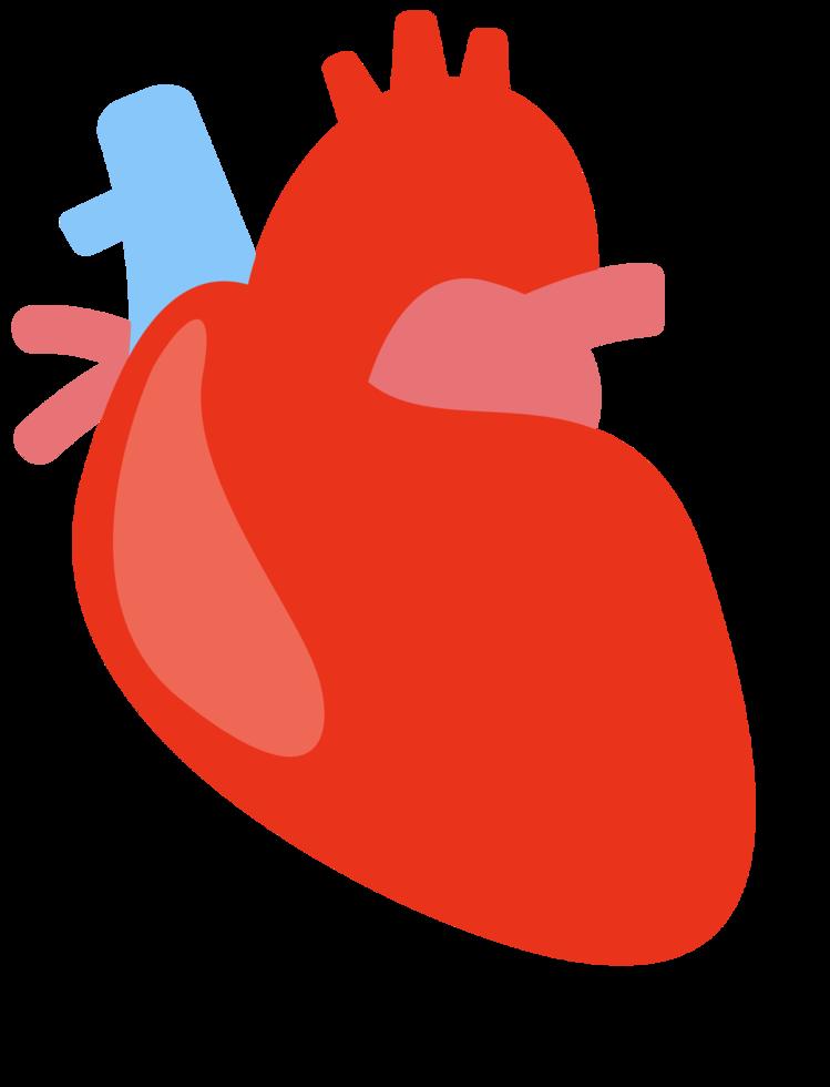 corazón humano png