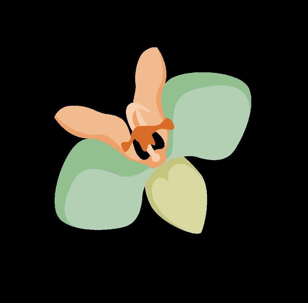 fiore polinesiano png