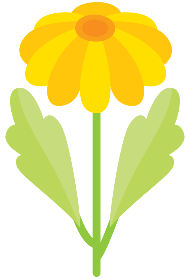 Flor bonita png
