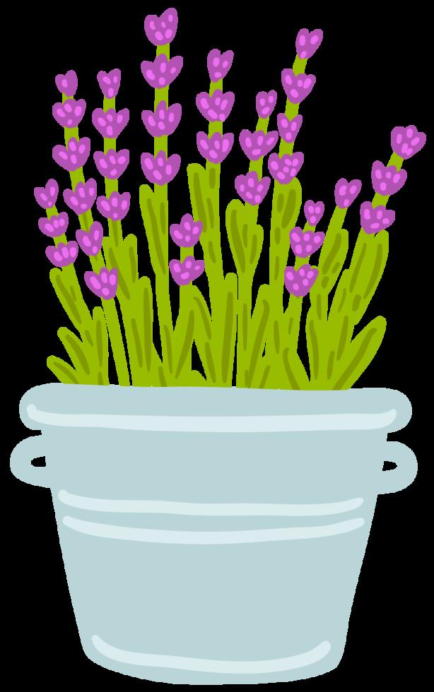 Flower lavender in pot png