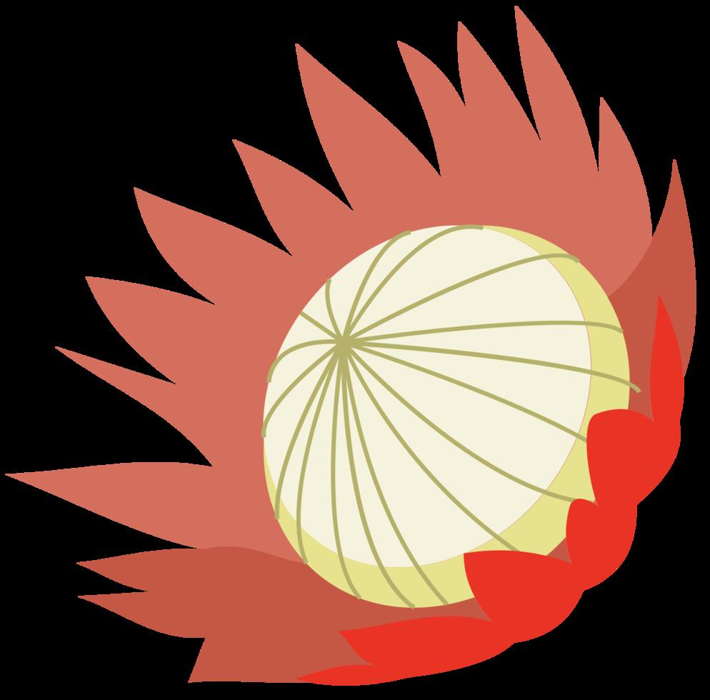 fleur de protée png
