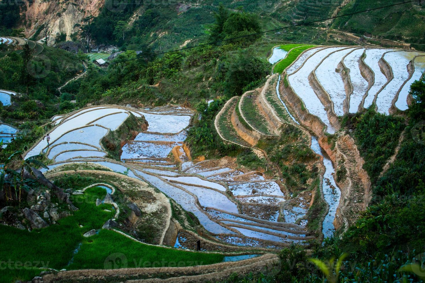 Rice Terrace photo