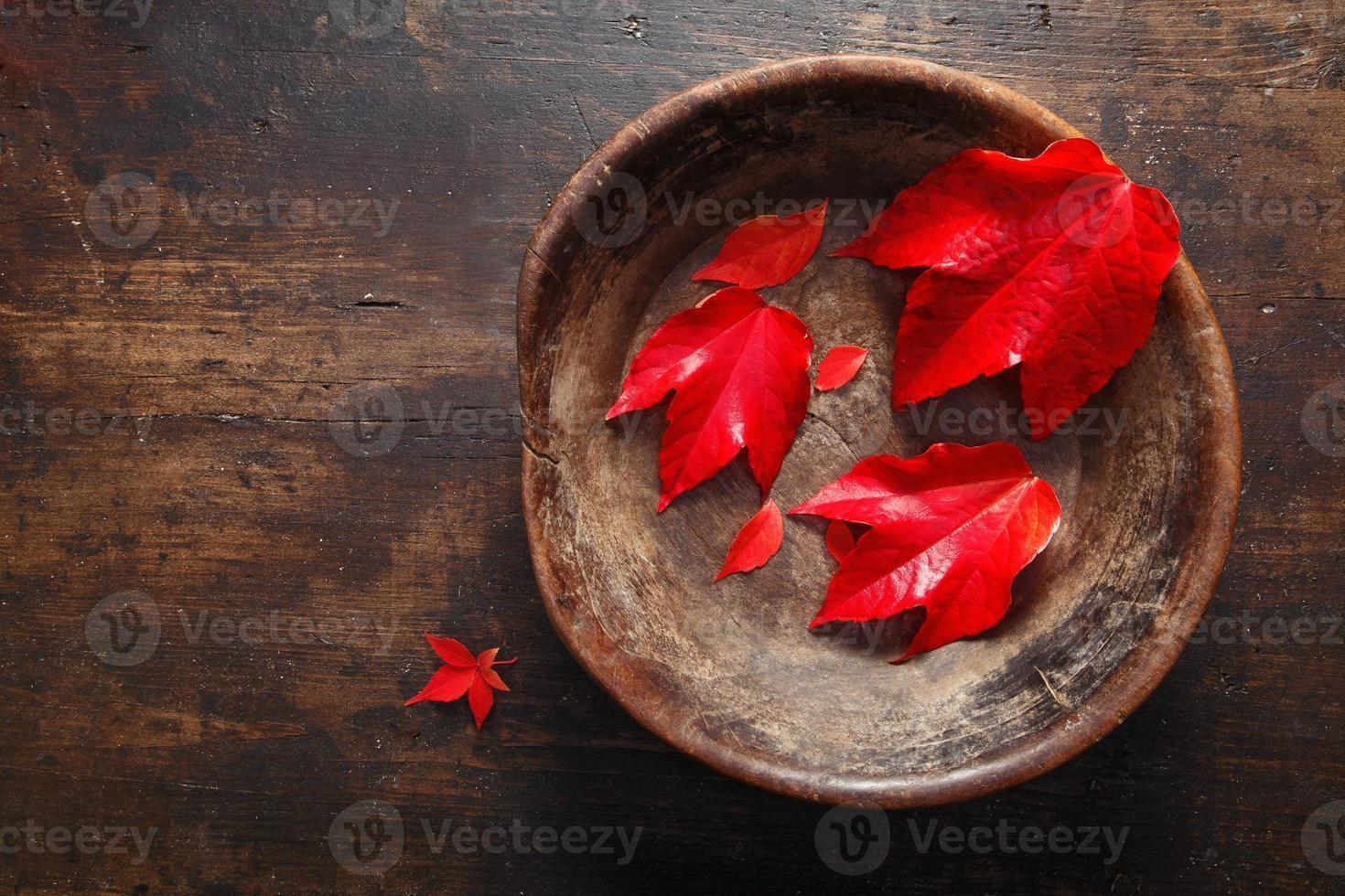 hoja de otoño bodegón foto