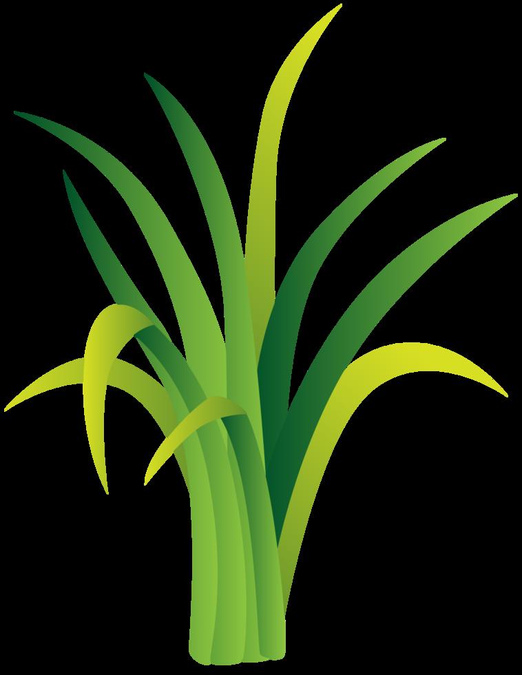 gräs png