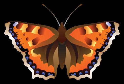 papillon png