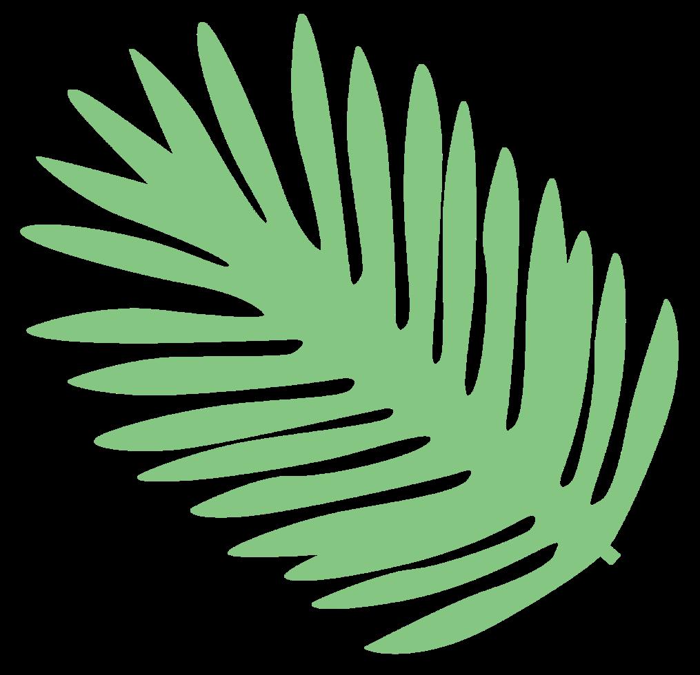 folha de palmeira png