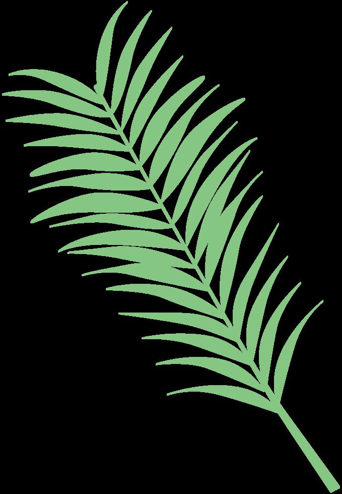 blad palm png