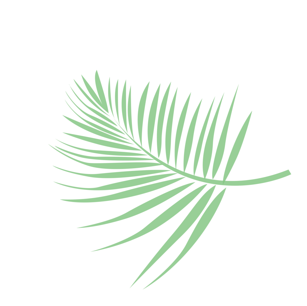 palmier à feuilles png