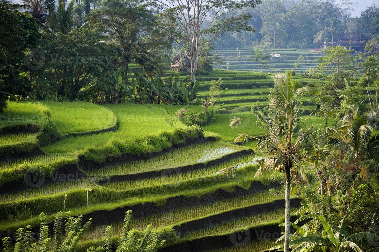 Bali, Indonesia. photo