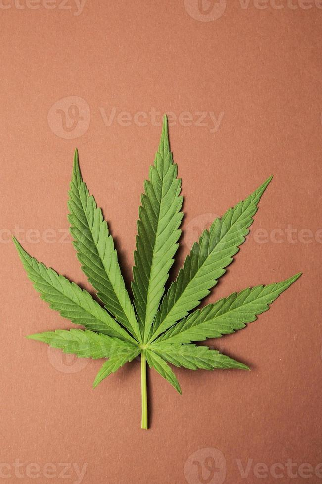 marijuana foto