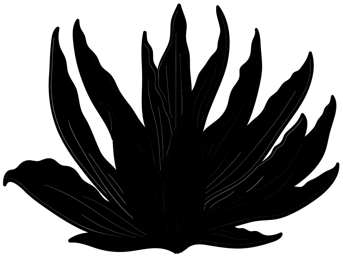 Aloe Pflanze png