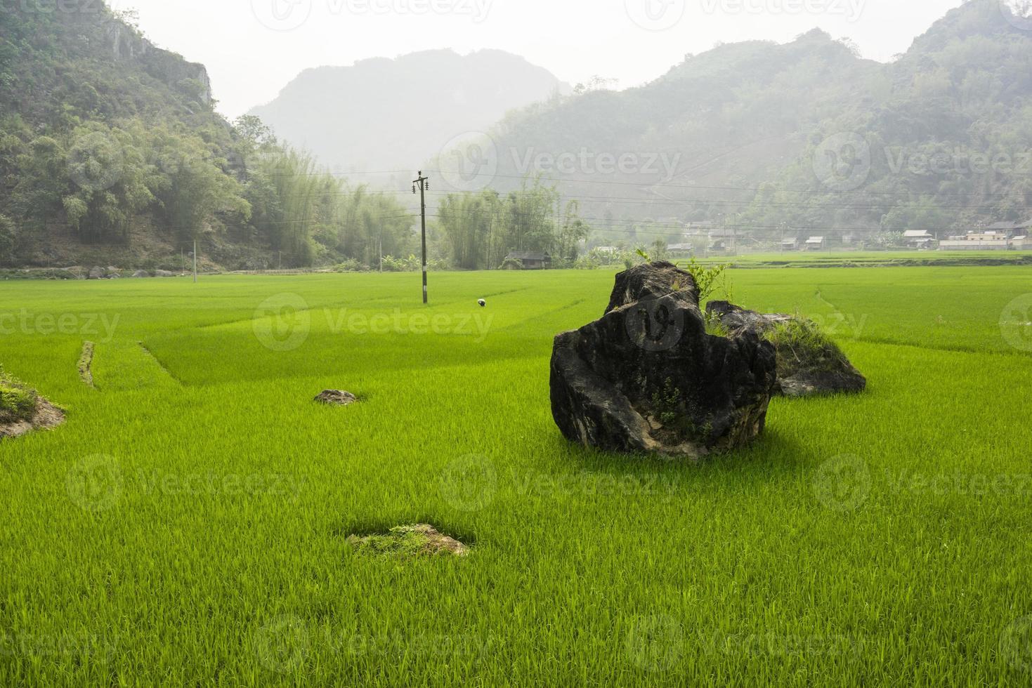 rizière photo