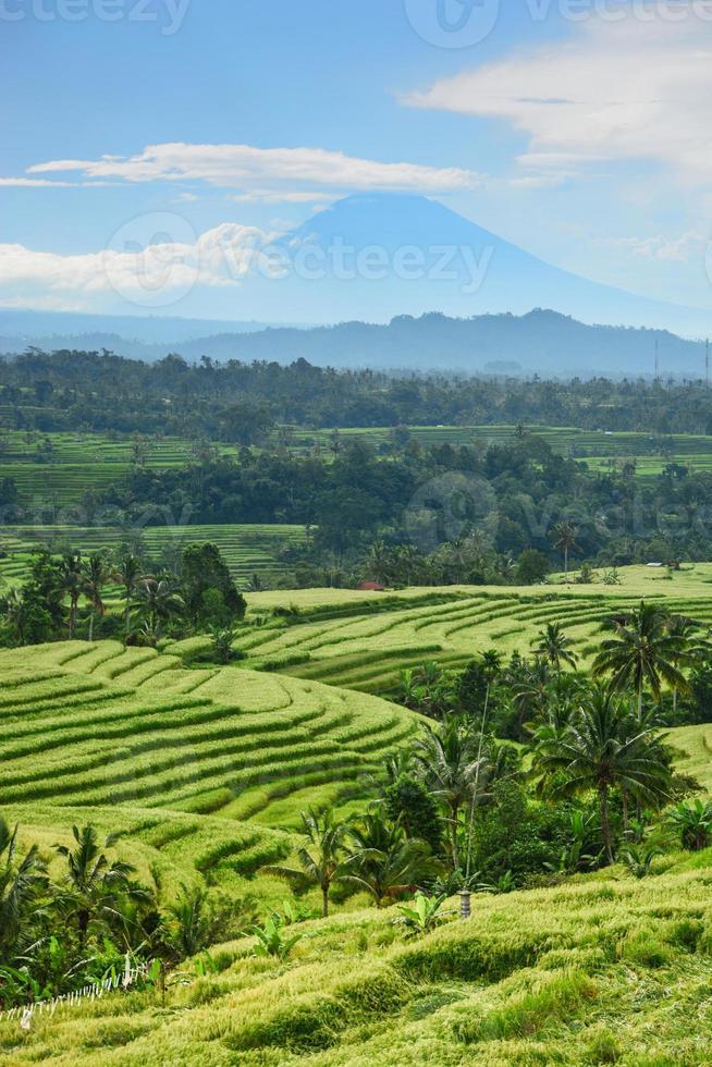 terraza de arroz bali, campo de arroz de jatiluwih foto