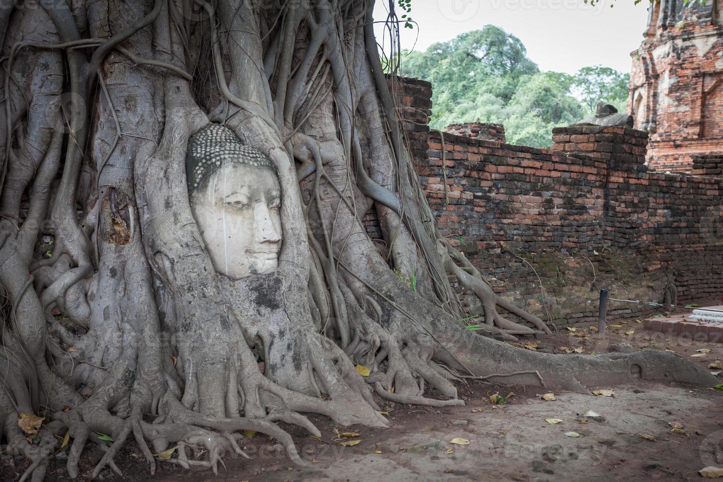 Cabeza de Buda en el árbol raíz en Ayutthaya Tailandia. foto