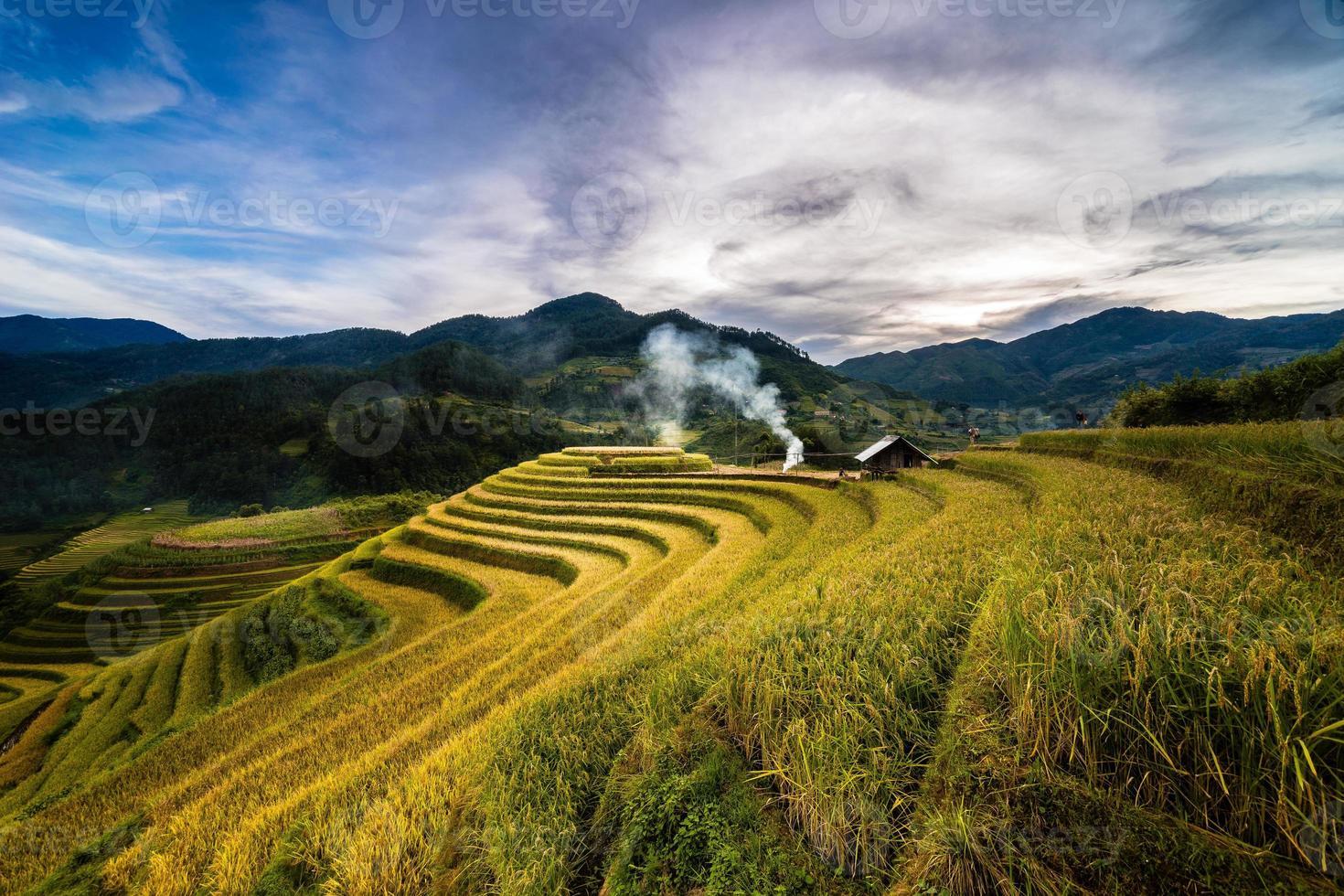 Campos de terrazas doradas en el norte de Vietnam foto