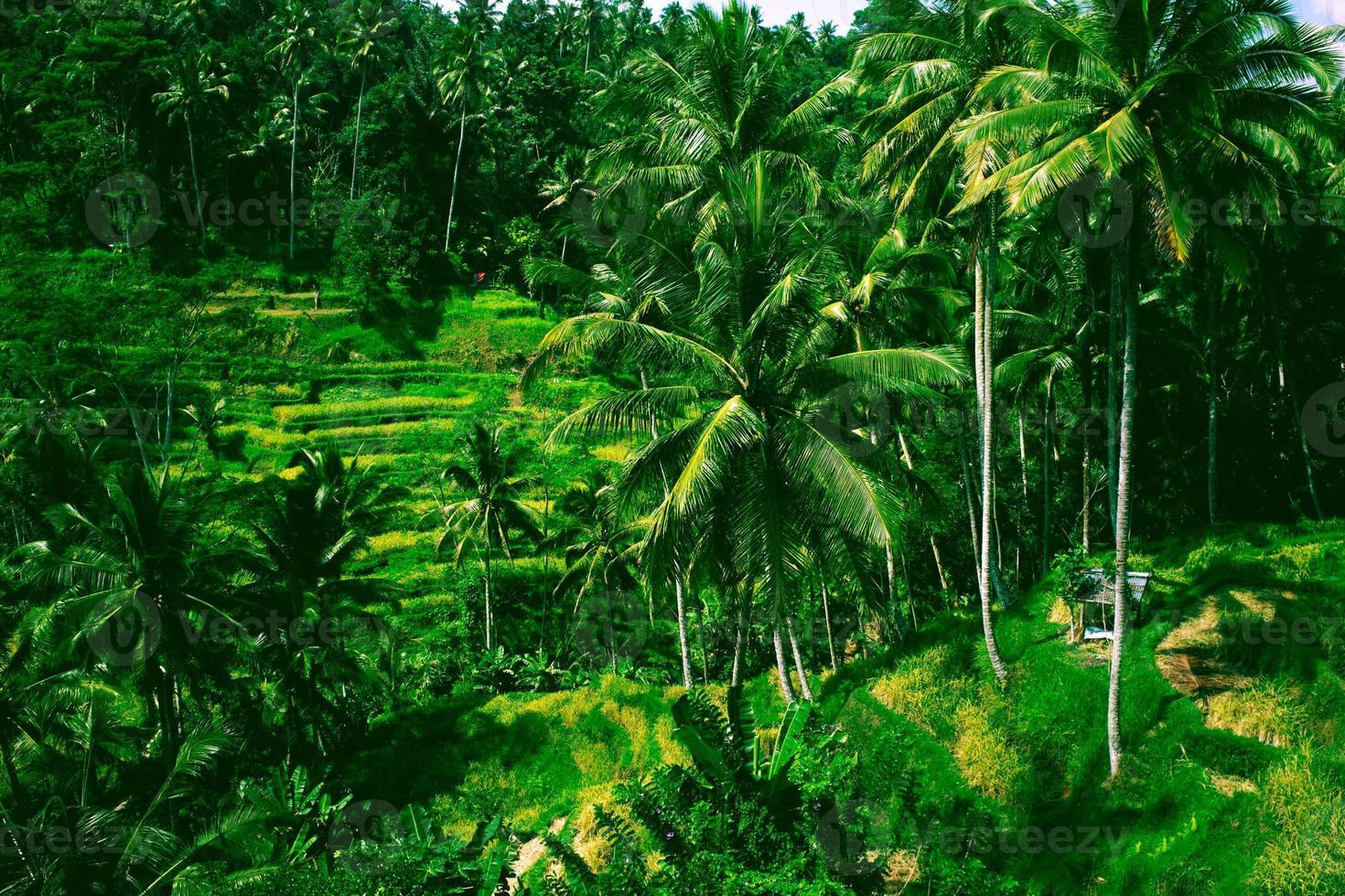 Tegalalang rice terrace in Bali island, Indonesia photo