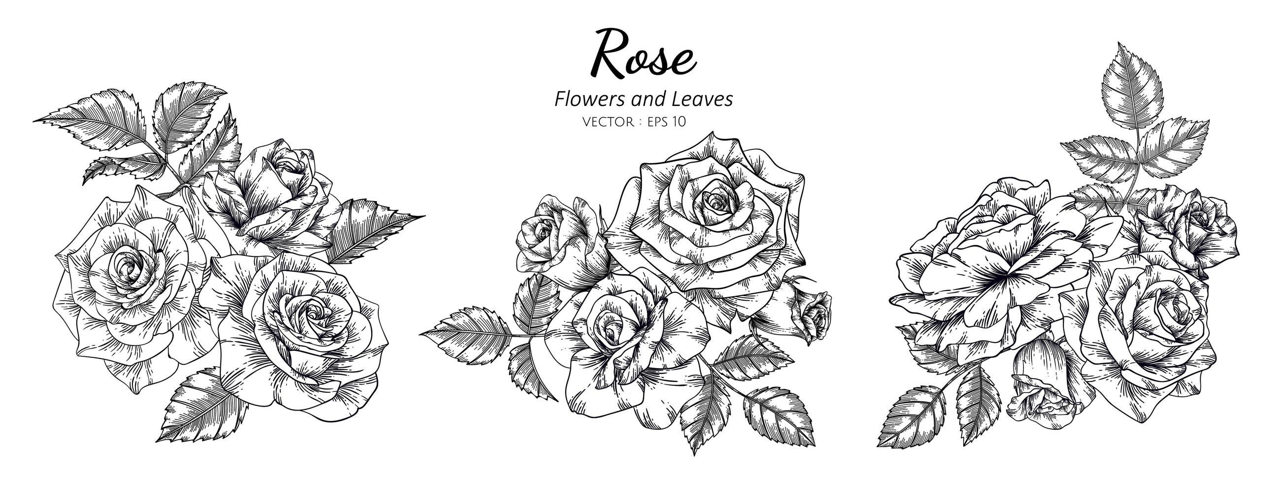 rosas botánicas dibujadas a mano vector
