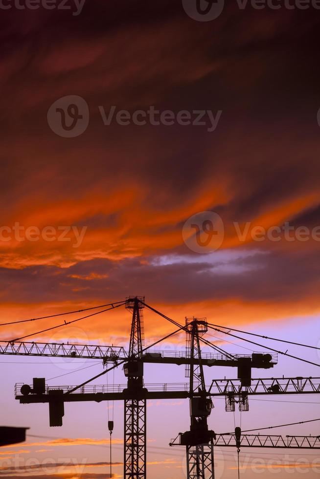 Cranes at dusk photo