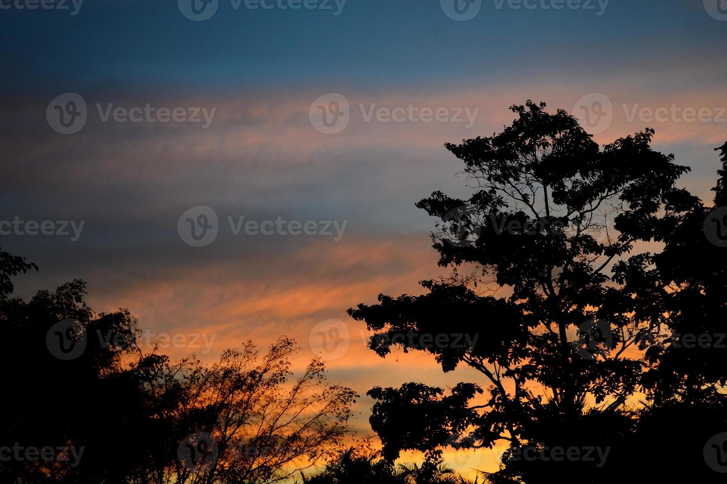 Silhouette of the tree photo