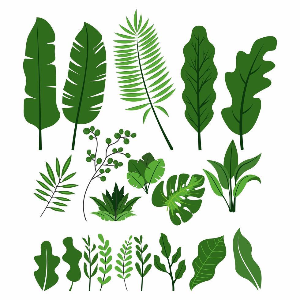 collection de feuilles vertes vecteur