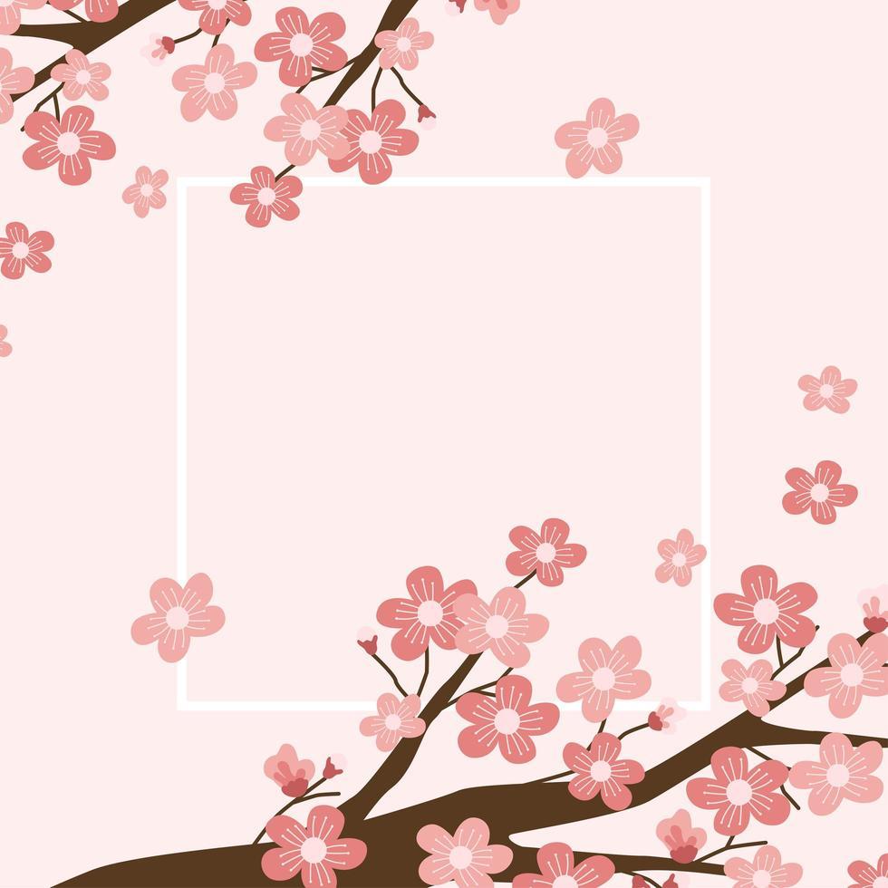 Cherry blossom background illustration vector