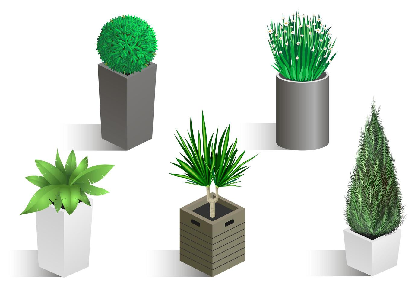 Isometric set of different plants in pots vector
