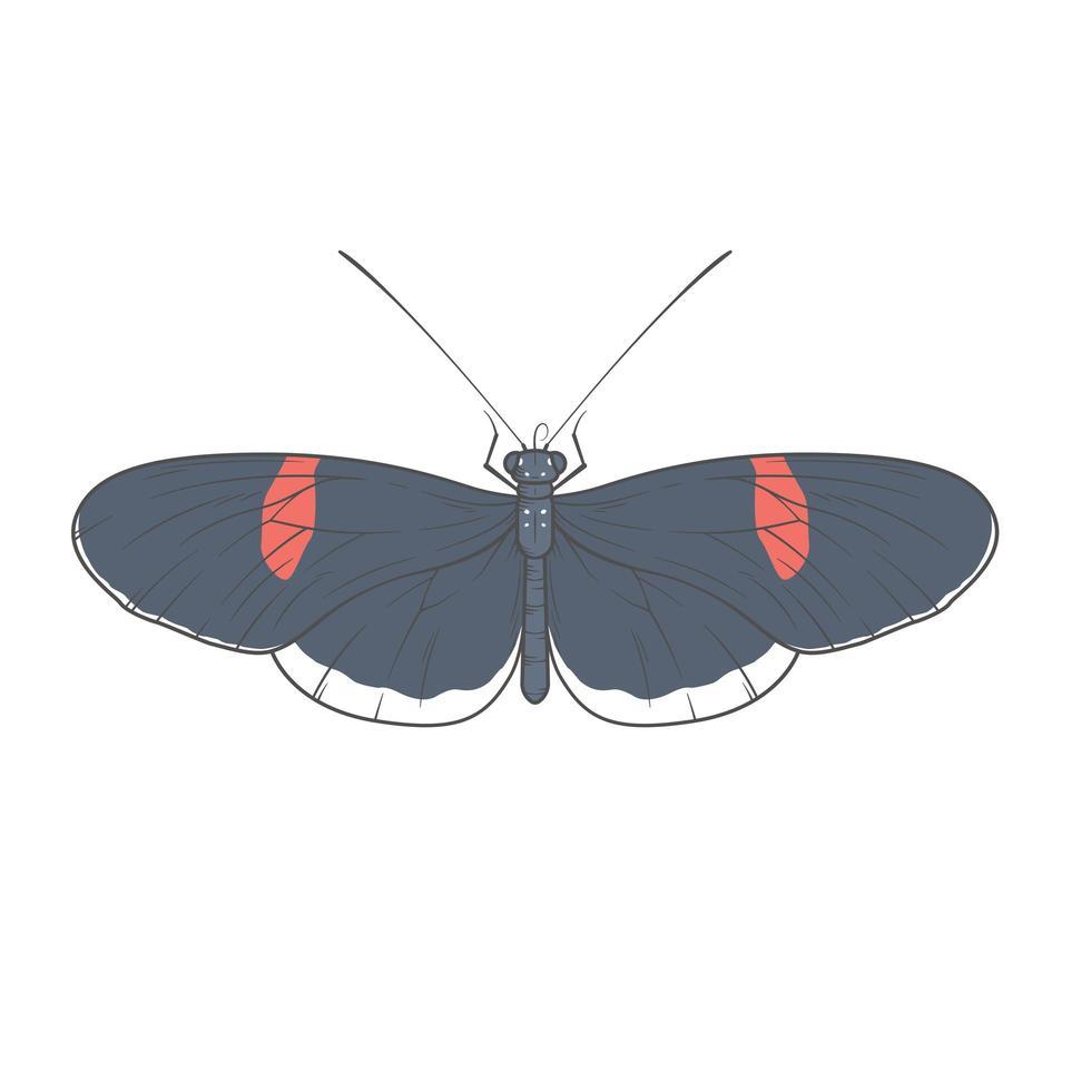 desenho de ilustração de borboleta vetor