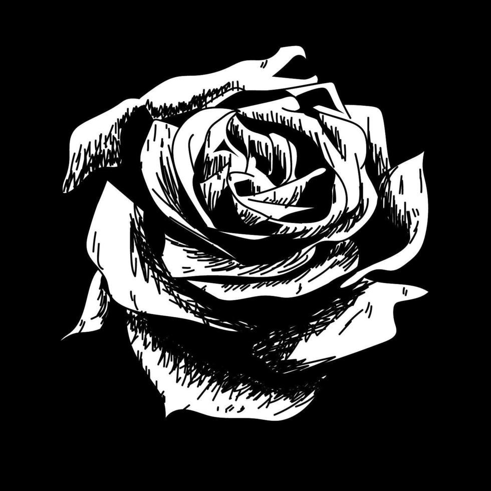 rosa desenho ícone de vetor de natureza flor em fundo preto