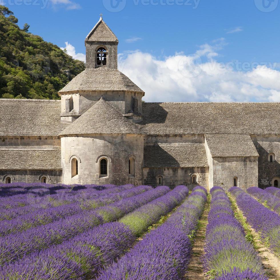 abadía de senanque y campo de lavanda foto