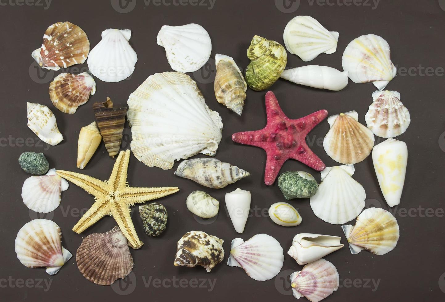 Marine creatures photo