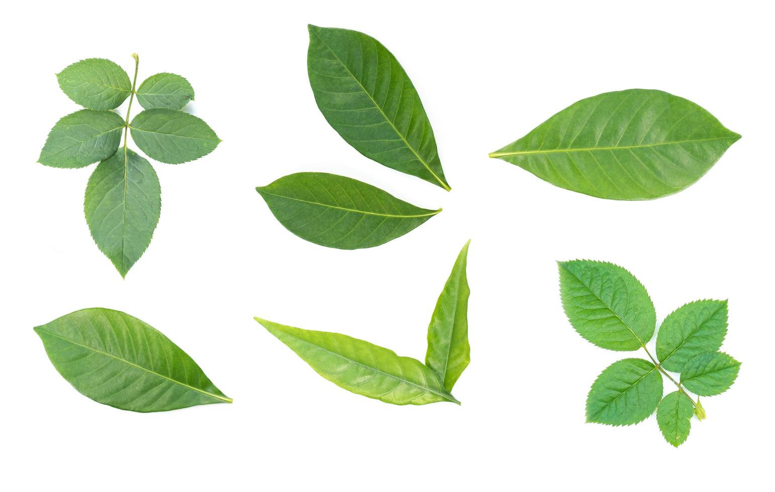 Bright green leaves on white background photo