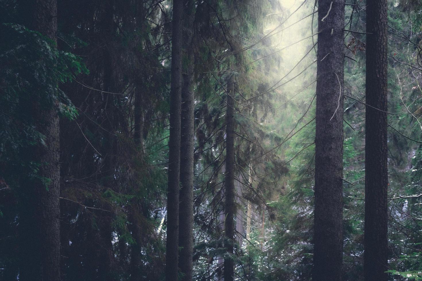 Misty forest in Czechia photo